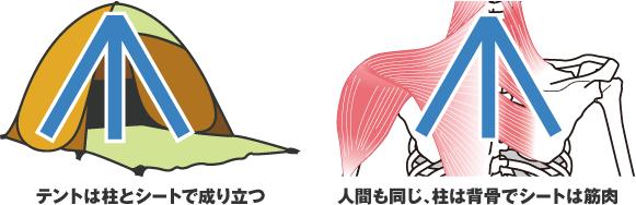 テントは柱とシートで成り立つ人間も同じ、柱は背骨でシートは筋肉